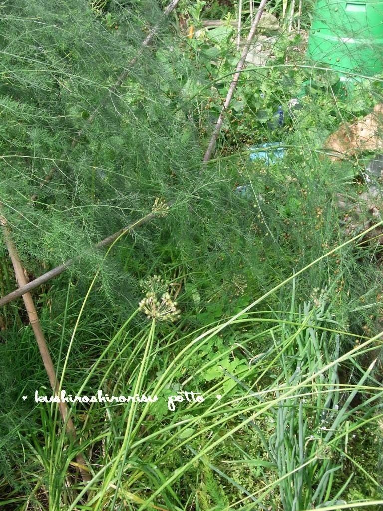 kushiroshirorisuな日々-荒れた庭から3