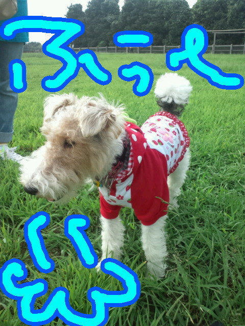 cookiegutanさんのブログ-110919_142206.jpg