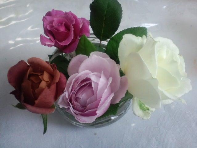 リナのブログ-家のバラ