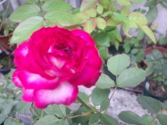 リナのブログ-PRB