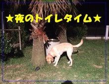 La Coda Happy Days-夜トイレタイム①