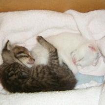 生まれて初めての子猫…