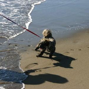 ルイと海と正直しっぽの画像