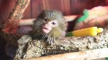 さる・猿・サル~♪