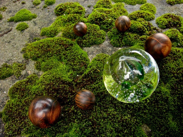 木の魂ー屋久島から大自然の叡智をー