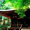 薩摩乃蔵の画像