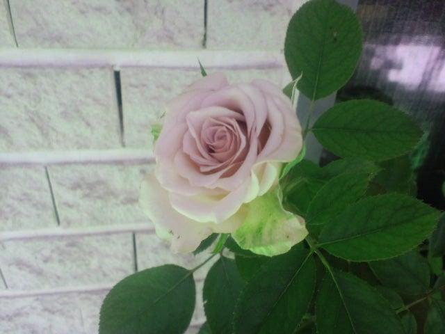 リナのブログ