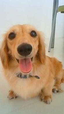 dogplexのブログ-200808291157005.jpg