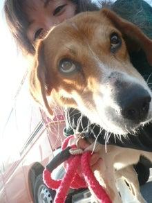 東北動物レスキュー 長崎の保健所の命を救う会の代表のブログ-せん譲渡