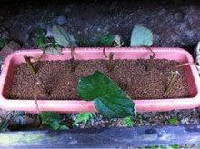 キウイの里洞戸復興プロジェクトのブログ-未設定