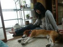 東北動物レスキュー 長崎の保健所の命を救う会の代表のブログ-セン