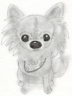 鉛筆でチワワちゃんを描こう♪と、りんの箱♪ イラストレーター『くるみ るか』のブログ