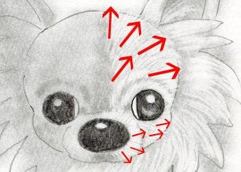 鉛筆でチワワちゃんを描こうとりんの箱 イラストレーター