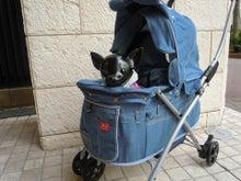 Hannari&PET-SPAのブログ