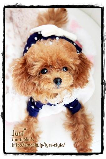 $cocotee* 写真ブログ(by いぬんちゅ達とのラブな生活)