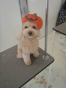 犬の日記 DOG DAY AFTERNOON