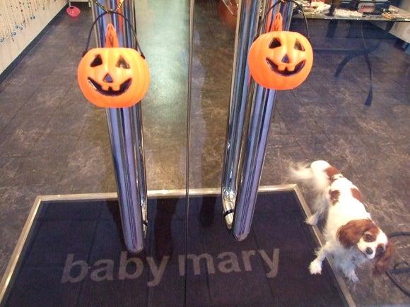 $babymary's blog