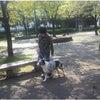 高崎市 犬のしつけ 外回り訓練の画像