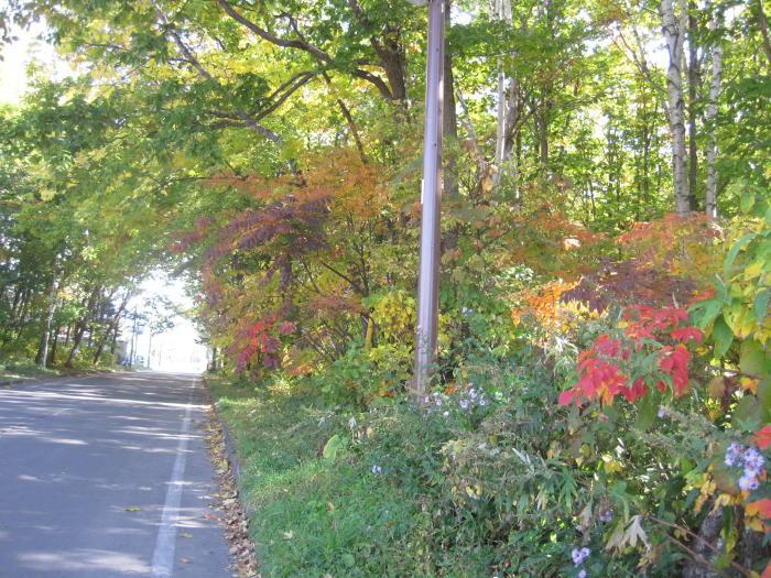 $歩き人ふみの徒歩世界旅行 日本・台湾編-通勤道の紅葉