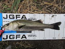 m.a papa's  Fishing  Style