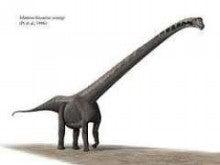ラパレントサウルス