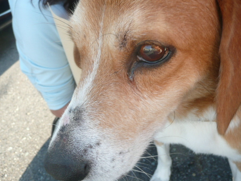 東北動物レスキュー 長崎の保健所の命を救う会の代表のブログ-セン譲渡