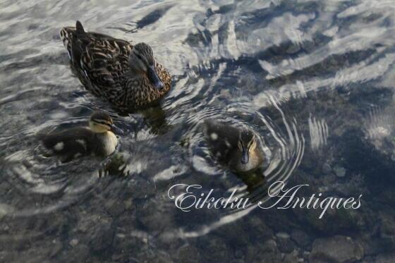 英国アンティークス・オフィシャルブログ-Ducklings