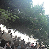 「HAU TREE LANAI」@ KAIMANAの画像