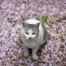 春夏秋冬(仮)