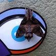 個性的な蛾