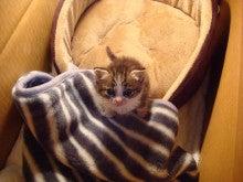 LOVE☆MOCHAブログ ~愛猫モカと趣味に生きる!主婦の日常~