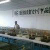 『横須賀カナリヤ品評大会』。の画像