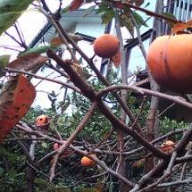 秋の収穫2