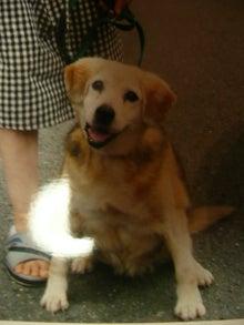 東北動物レスキュー 長崎の保健所の命を救う会の代表のブログ-まりちゃんその後