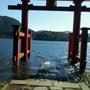 箱根神社でパワー充電…