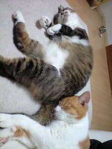 ずれずれブログ…湘南で猫と暮らせば…-111016_2059~0001.jpg