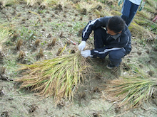 $SASAKI FARM Daily