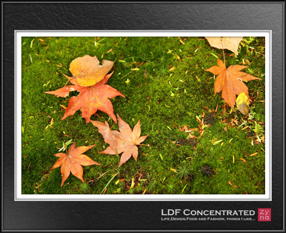 LDF Concentrated