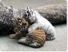 $nawomyのブログ-トラ