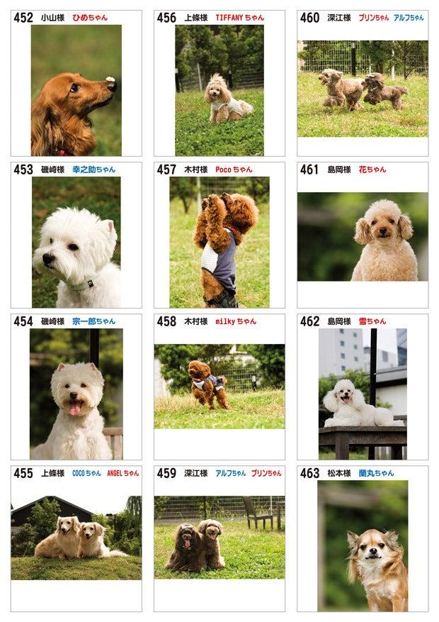Dog Petit Resort   綱吉の湯