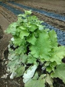 ゆうの野菜畑-111020_1414~02.jpg