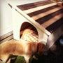 木製の犬小屋