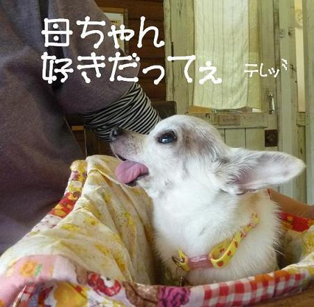 アル&ムーのブログ-テレッ