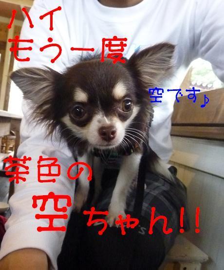 アル&ムーのブログ-空ちゃん