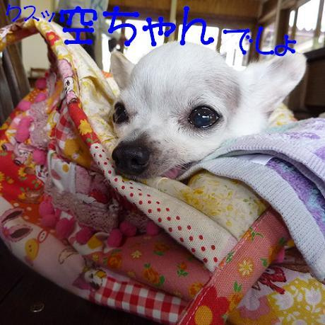 アル&ムーのブログ-タンポポちゃん