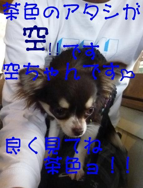 アル&ムーのブログ-空ダョ