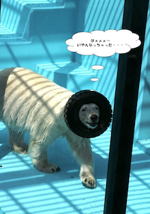 $山本チヌ研究会ブログ