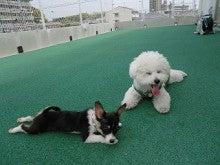 松波動物病院メディカルセンター★ドッグトレーニング日記