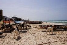 自転車世界横断!!TERU-TERU project-Wild Senegal17