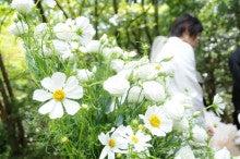 $ブライダル装花専門店AZUR-コスモスの祭壇